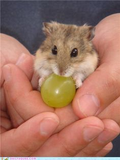 I would like to be as happy as this creature with the grape.