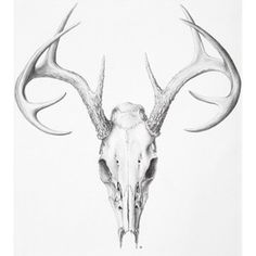 Deer Skull - Illustration@Science-Art.Com