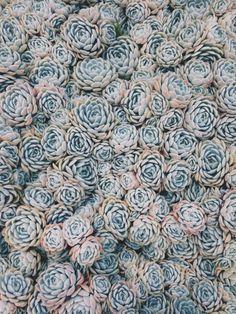 Succulents | VSCO | Meghan Sheppard