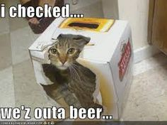 at least he knows good beer. Funny Drunk Quotes, Funny Drinking Quotes, Funny Memes, Humorous Quotes, Cat Memes, Funny Dogs, Funny Animals, Cute Animals, Funny Kitties