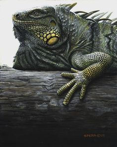color - Edward Spera / Green Smiling Iguana These have to be the coolest animals ever! A living dragon! Reptiles And Amphibians, Mammals, Beautiful Creatures, Animals Beautiful, Animals And Pets, Cute Animals, Chameleon Lizard, Green Iguana, Komodo Dragon
