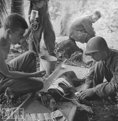 American G.I.s treat a wounded combat-trained K-9 dog on Orote Peninsula, Jan 1, 1944.