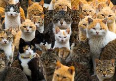 atlanticinfocus:From A Visit to Aoshima, a Japanese 'Cat Island', one of 24 photos.Cats crowd the harbor on Aoshima Island in the Ehime prefecture of southern Japan on February (Thomas Peter/Reuters) I Love Cats, Cute Cats, Funny Cats, Funny Animals, Cute Animals, Funniest Animals, Animal Memes, Crazy Cat Lady, Crazy Cats