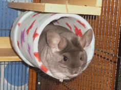 How To Make Your Own Fleece Covered Tubes | LUCKY'S WONDER OF CHINCHILLAS