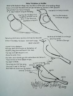 How to Draw Worksheets for Young Artist: How To Draw A Robin Bird. Drawing Worksheet For A Young Artist.
