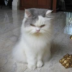 Scrooge!! LOL this is the look my cat Holly has all the time