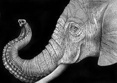 Detailed animal drawings by Tim Jeffs