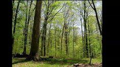 Un año en la vida de un bosque, mostrado en un time-lapse de 3 minutos