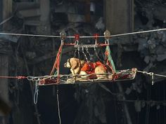 Riley, 9/11 K9 Hero, is in a basket being sent over a 60-foot-deep canyon to search the rubble of the North Tower of the World Trade Center September 15, 2001 days after the September 11, 2001 terrorist attack. (U.S. Navy Photo by Jim Watson/Getty Images) #Rescue_Dogs #9_11