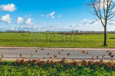 Paved road through agricultural landscape in late autumn; Dry leaves in wire mesh fence along a road; Wide and flat landscape with fields and bare trees