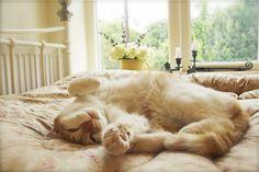 Dulux Gardenia (and gorgeous Cat!)