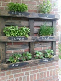 Ideetjes met pailletten Pallets Garden, Backyard, Plants, Patio, Palette Garden, Backyards, Plant, Planets