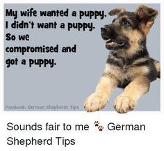 Funny German Shepherd Memes of 2017 on SIZZLE   Dog Meme