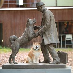 "95.8k Likes, 1,026 Comments - Shinjiro Ono (@marutaro) on Instagram: ""Have you ever heard of Hachiko the dog? Meet Hachikō, a dog so faithful that he became a national…"""