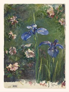 """Wild Roses and Irises,"" John La Farge, 1887, gouache and watercolor on white wove paper, 14 1/2 x 10 7/16"",  Metropolitan Museum of Art."