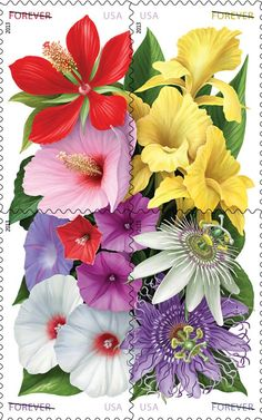 """The year 2013 marks the 500th anniversary of the naming of Florida. The USPS will be celebrating the occasion with these elegant floral stamps. The origin of the name Florida comes from the Spanish Pascua Florida, meaning """"feast of flowers"""" (Easter)."""