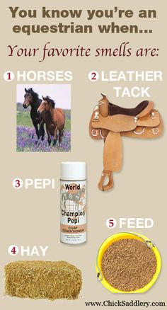 You Know You're An Equestrian When. Horses, Tack, Pepi, Hay and Feed are your favorite smells. So true! Equine Quotes, Equestrian Quotes, Equestrian Problems, Horse Quotes, Horse Sayings, Girl Sayings, Equestrian Style, My Horse, Horse Love