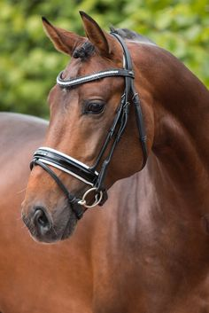 The Premiera Milano is a gorgeous snaffle bridle with elegant rolled details, a curved crystal browband, and a wide soft patent leather noseband. This bridle also features a very soft anatomically sha