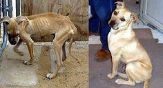 Always rescue!! Your love can make a difference in a dog's life! This looks 110% like my dog! But he was much healthier than that when we adopted him