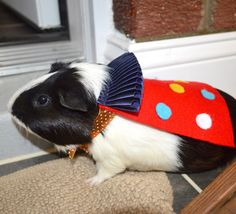 Joker / Jester costume Clown guinea pig / pet by laMarmotaCafe, $14.00