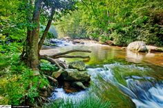 Beautiful image of a River in North Carolina Size; 1200 x 800 Source; www.captainkimo.com