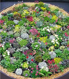 Eine prachtvolle Mischung niedriger Stauden, die im Steingarten, an Böschungen, in Kübeln und Trögen einen farbenfrohen Blickfang bietet. Die Mischung enthält u.a. die farbenprächtig blühende Grasnelke, niedrige Glockenblumen in Weiß und Blau, leuchtendes Carex und attraktive Sedum-Arten. Blüte je nach Sorte: Mai-August.