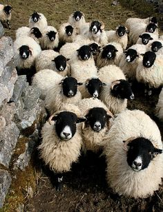 babi anim, anim babi, sheepcut babi, baby animals, animal babies