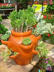 11 Perfect Vegetables for Large Garden Pots