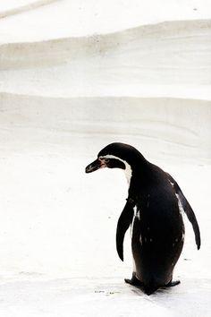 penguin | Canon EOS KISS DIGITAL X  / SIGMA : 70 - 300mm