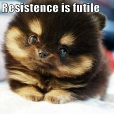 Resistence is futile - www.funny-pictures-blog.com