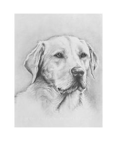 yellow lab labrador retriever dog breed design by mike sibley t