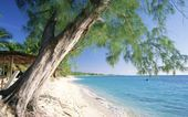 Discover the best top things to do in Grand Cayman including Vivo, Starfish Point, Cemetery Beach.