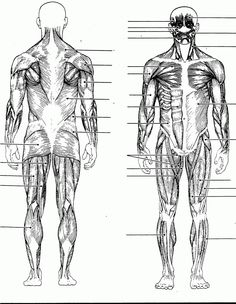 label the muscles of the body (side view) | educator | pinterest, Muscles
