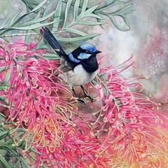 Blue Wren and Grevillea by Heidi Willis