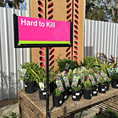The kind of plants we need... yes! #Lauderdale #Tasmania #garden #flower #PlantsPlus Photo and article for think-tasmania.com