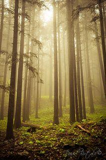 The Sacred Forest, Camaldoli(Tuscany)