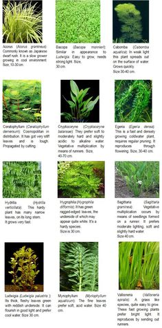 Plants http://agritech.tnau.ac.in/fishery/fish_ornamental.html