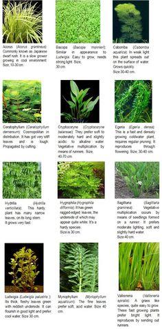 Plants http://agritech.tnau.ac.in/fishery/fish_ornamental.html