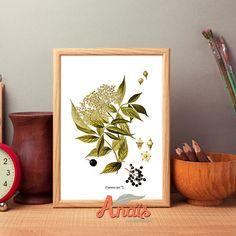Elder flower - Botanical illustration, print, light beige paper, vintage, wall art, decoration, Easter decor by AnaisHomeDecor on Etsy