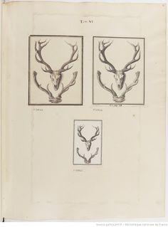 Figures pour l'histoire des quadrupèdes, par M. de Buffon.. Tome II / Déssins [sic] originaux par DeSeve et Buvée, avec les Gravures des Editions in12 et in4° vol. 5 à 7.   1755-1758