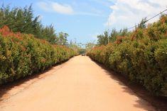 Bangka Botanical Garden Tempat Wisata Eksotis di Kepulauan Bangka Belitung - Kepulauan Bangka Belitung