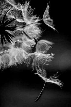 Indian Heart — soie–noire:   Effimero…. S.N.   ☆