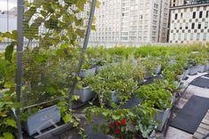 http://www.essentaste.com/copertina/roof-top-veg-garden/  Image by Fosca Piccinelli per Essen A Taste magazine©