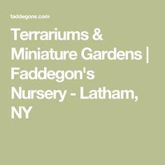 Terrariums & Miniature Gardens   Faddegon's Nursery - Latham, NY