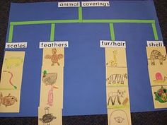 Today, I modeled a lesson on nouns and verbs. I used the book Doing the Animal Bop . First we read the book just for fun and acted out the a. Kindergarten Science, Elementary Science, Science Classroom, Kindergarten Classroom, Teaching Science, Science Activities, Science Projects, Classroom Activities, Science Ideas
