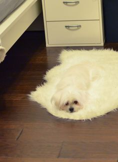 Dude, your dog is melting.