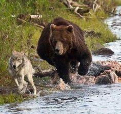 El cazador cazado. De momento desconozco el autor de la foto.