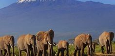 Adventure Travel with Rickshaw Travels | If climbing mountains is your passion, then the Kilimanjaro challenge will take your breath away.   | Mount Kilimanjaro Climb Packages | Machame Route - 7 Days