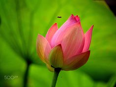 Green & Pink - by Helen  Liao