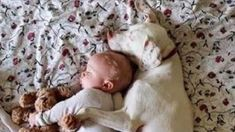 This adorable rescue dog and baby duo are so cute, there's simply nothing more we need to say to make them even more lovable. Every photo we see makes us fall more in love than the last! Baby Puppies, Baby Dogs, Doggies, Human Babies, Fur Babies, Rescue Dogs, Animal Rescue, Animals For Kids, Cute Animals
